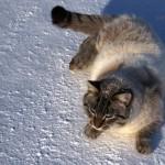 Кот позирует на камеру