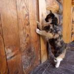 Кошка просится домой
