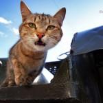 Заброшенные - кот и трактор2