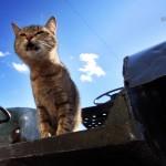 Заброшенные - кот и трактор3