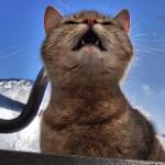Заброшенные - кот и трактор4