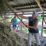 Сельская жизнь. Дияшево 58