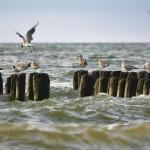 Балтийское море. Зеленоградск 14