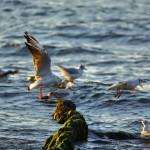 Балтийское море. Зеленоградск 32