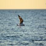 Балтийское море. Зеленоградск 33
