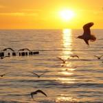 Балтийское море. Зеленоградск 40