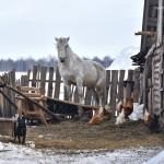 Село Андреевка Аургазинского района. Домашнее хозяйство