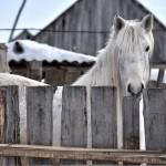 Село Андреевка Аургазинского района. Скорбященская церковь. Лошадь