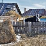 Село Андреевка Аургазинского района. Загон для скотины