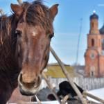 Село Андреевка Аургазинского района. Конь