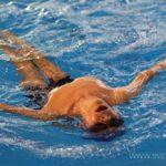 Турнир по плаванию среди детей-инвалидов всех категорий на призы олимпийского чемпиона Вениамина Таяновича 45
