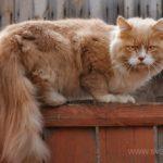 Бездомные кошки 002