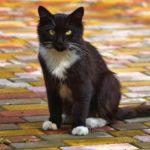 Бездомные кошки 004