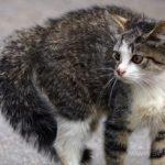 Бездомные кошки 006
