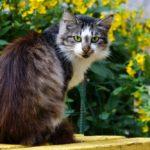Бездомные кошки 008