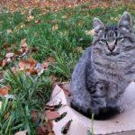 Бездомные кошки 011