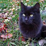 Бездомные кошки 012