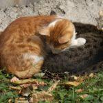Бездомные кошки 015