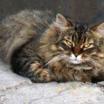 Бездомные кошки   016