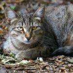 Бездомные кошки 017