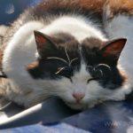 Бездомные кошки  018