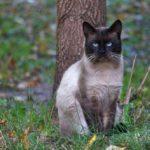 Бездомные кошки  019