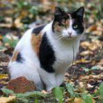 Бездомные кошки  021
