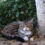 Бездомные кошки 022