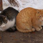 Бездомные кошки 024