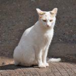 Бездомные кошки 025