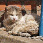 Бездомные кошки 026