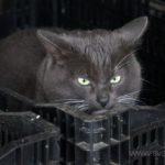 Бездомные кошки 027