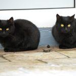Бездомные кошки 028