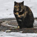 Бездомные кошки 029