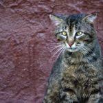 Бездомные кошки 031