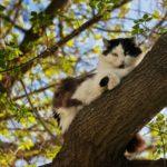 Бездомные кошки 032