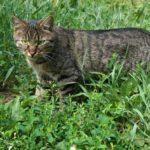 Бездомные кошки 033