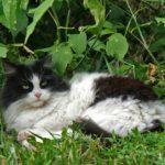 Бездомные кошки 034