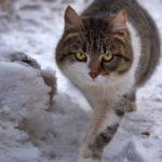Бездомные кошки 035