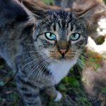 Бездомные кошки 036