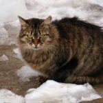 Бездомные кошки 037