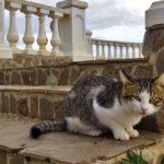 Бездомные кошки 038
