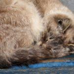 Бездомные кошки 039