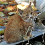 Бездомные кошки 040