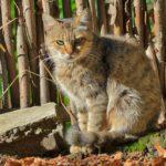 Бездомные кошки 041