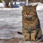Бездомные кошки 043