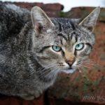Бездомные кошки 045