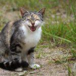 Бездомные кошки 047
