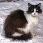 Бездомные кошки 049