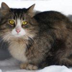 Бездомные кошки 050